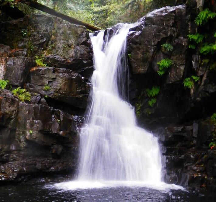 Mohun Creek, Vancouver Island, BC