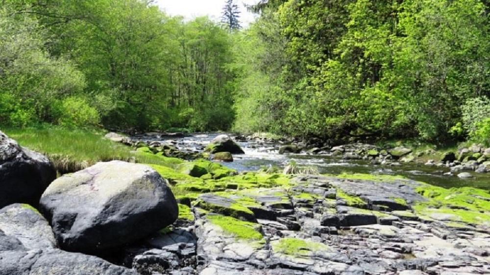 Mohun Creek