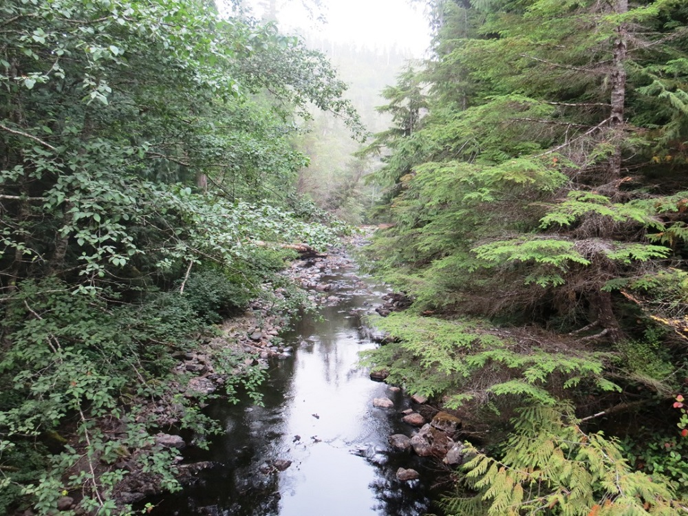 Nahwitti River, Vancouver Island, Pacific Northwest