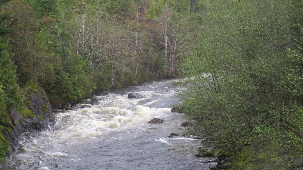 Nesook River, Vancouver Island, Pacific Northwest