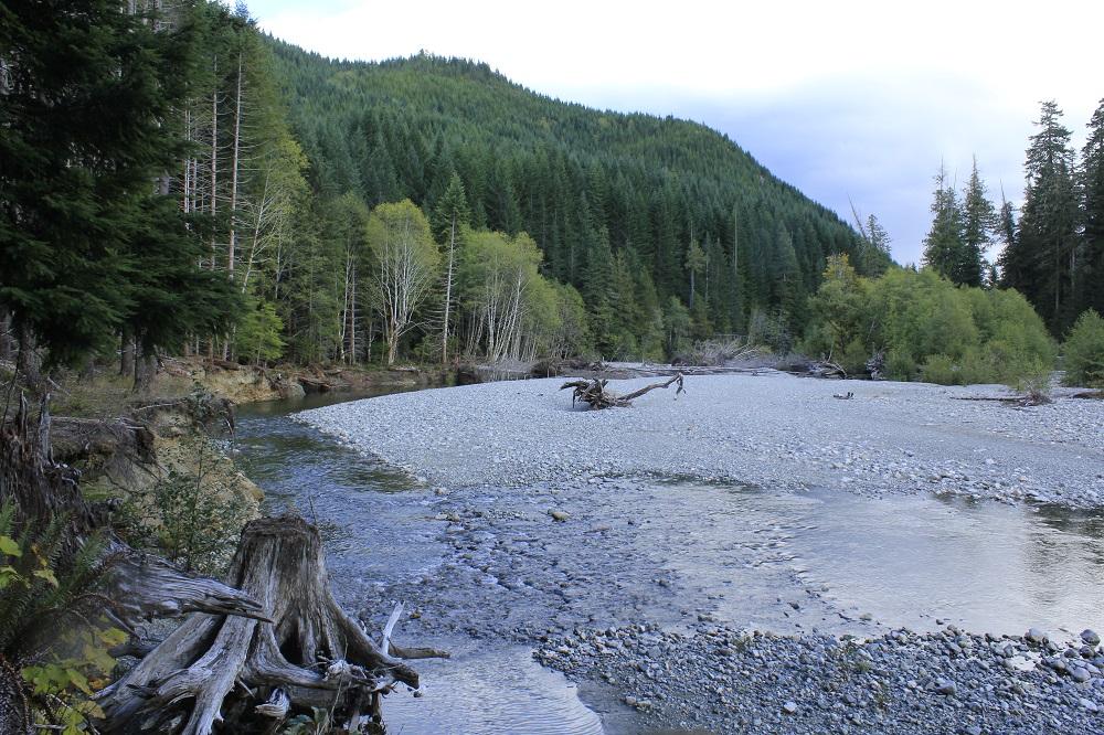 Nimpkish River, Vancouver Island, Pacific Northwest