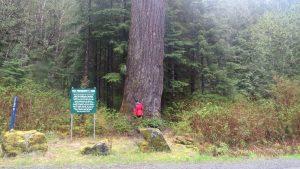 Presidents Tree, BC Coastal Region