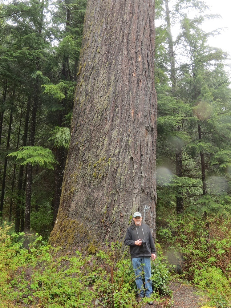 Presidents Tree, Big Trees, Trees, Pacific Northwest