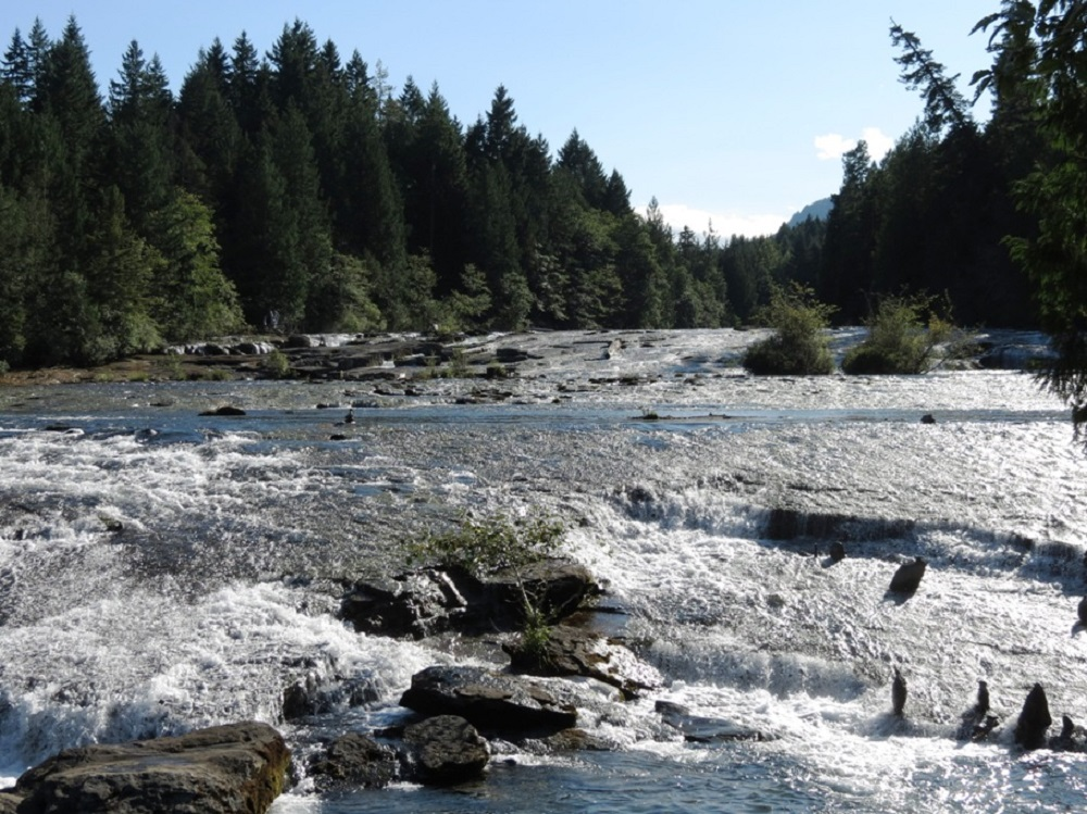 Puntledge River, Vancouver Island, Pacific Northwest