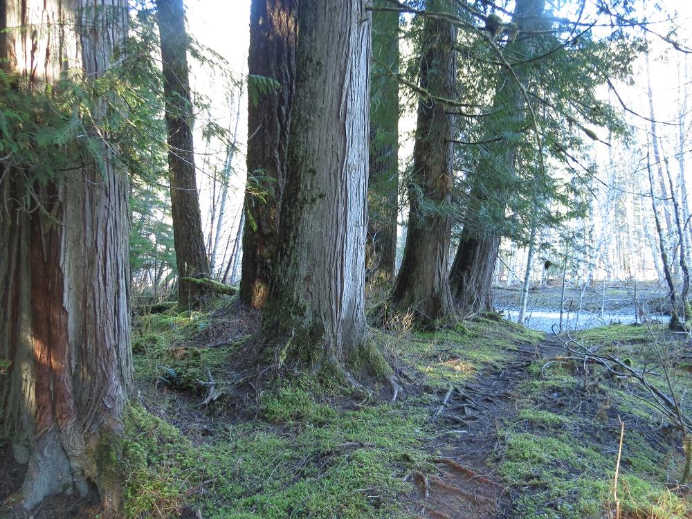 White River Park, Vancouver Island, BC