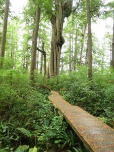Hamilton Marsh, Coombs, Vancouver Island, BC Coastal Region