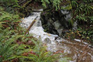 Johns Creek, Vancouver Island, BC, Coastal Region
