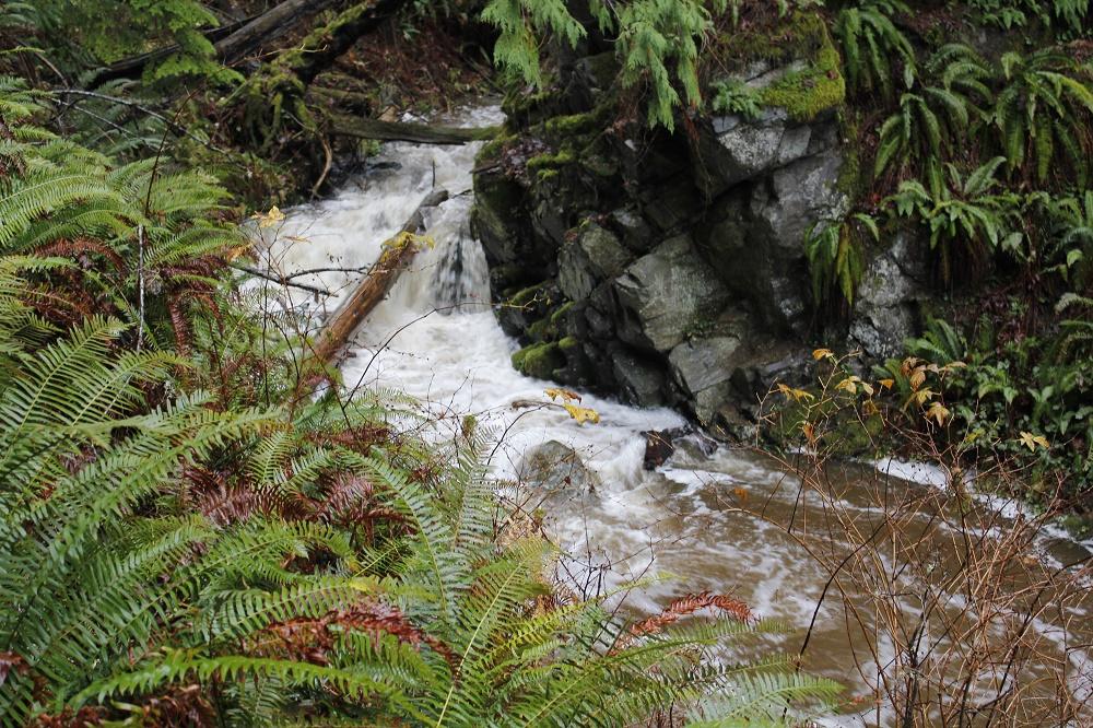 Johns Creek, Pacific Northwest Parks