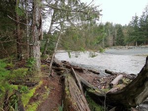 Black Creek Area Trail, BC Coastal Region