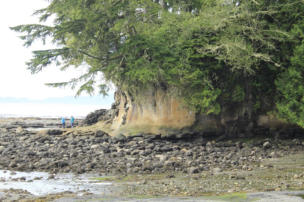Botanical Beach Park, Vancouver Island, BC, Coastal Region