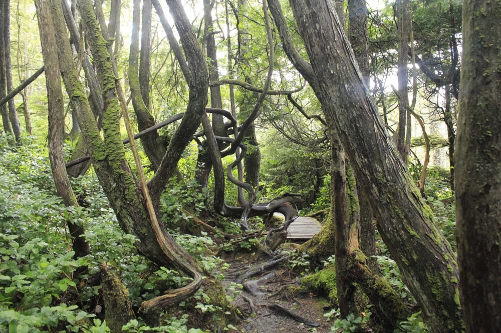 Botany Bay Trail, Vancouver Island, BC, Coastal Region, Trails