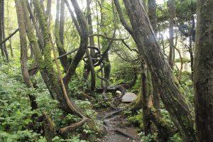 Botany Bay Trail, Botanical Beach Park, Vancouver Island, BC, Coastal Region