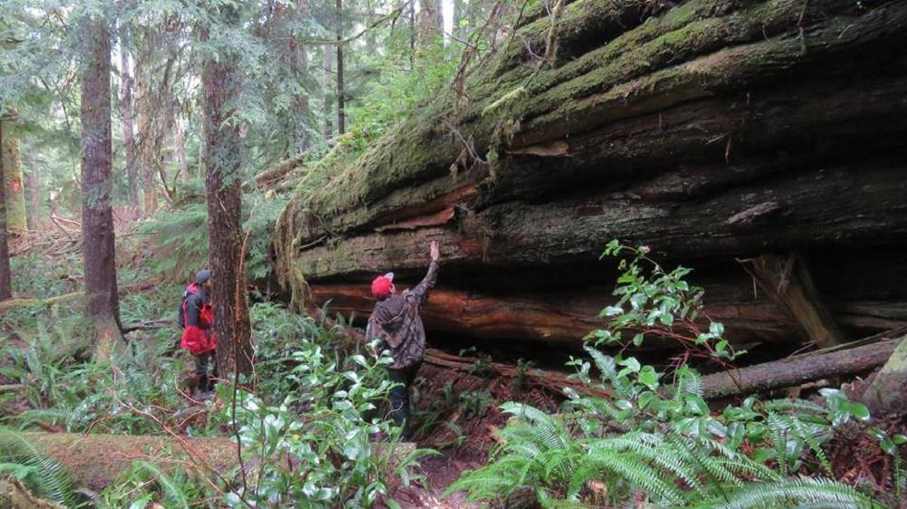 Walbran Carmanah Park, Pacific Northwest Parks