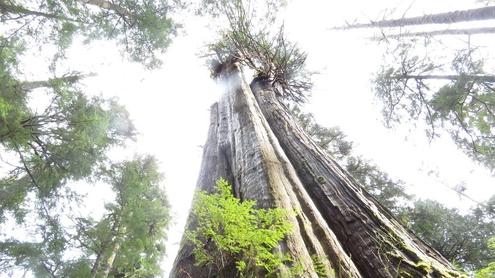 Carmanah Walbran Park, Pacific Northwest Parks
