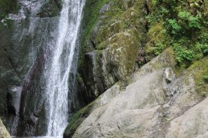 Goldstream Park, Brentwood Bay, Vancouver Island, BC Coastal Region,