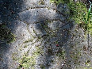 Petroglyph Park, Vancouver Island, BC