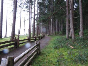 Rathtrevor Park, Vancouver Island, BC