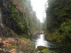 Canyon View Trail, Vancouver Island, BC
