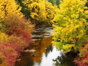Quinsam River trail, Vancouver Island, BC