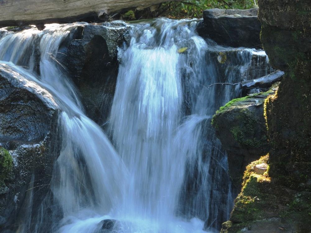 Quinsam River trail, Pacific Northwest Trails