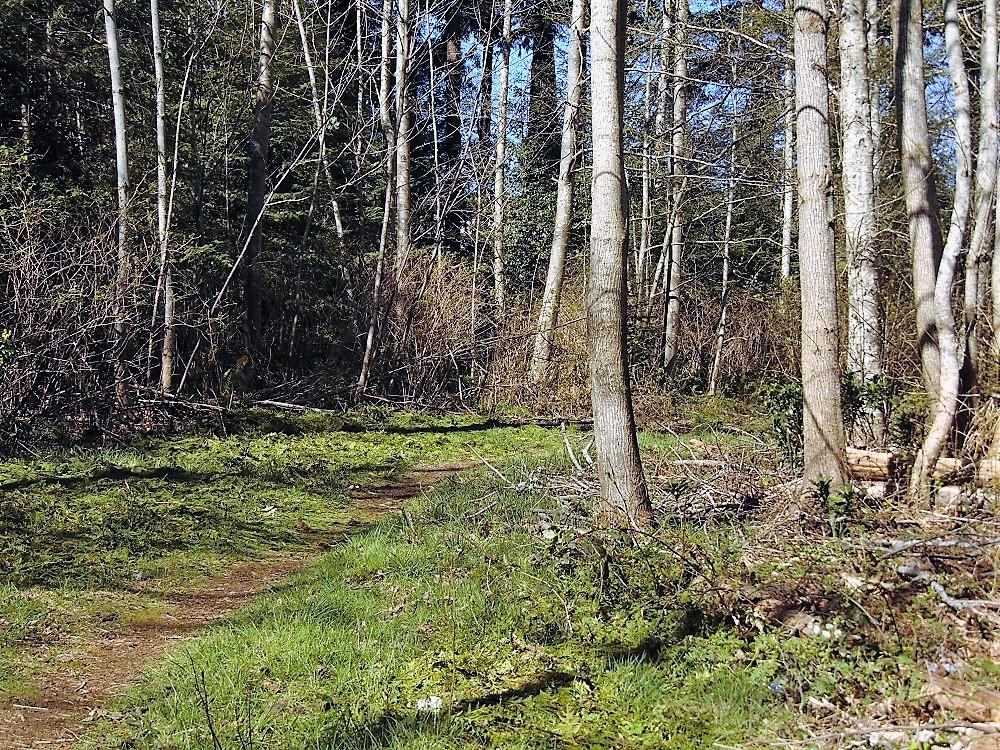 Alder Medical Trail, Trails, Pacific Northwest