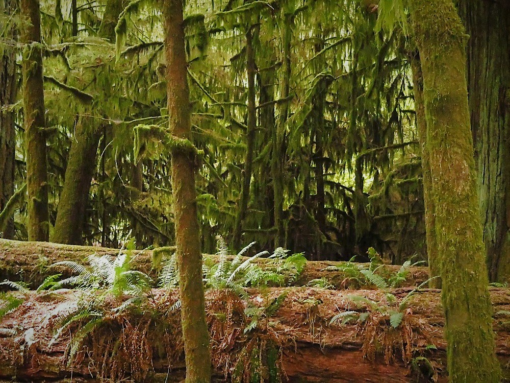 Cathedral Grove Park, Pacific Northwest Parks