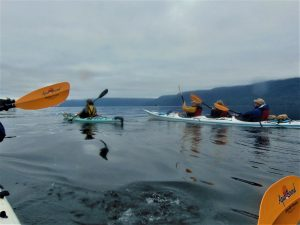 Kayaking the north island waters