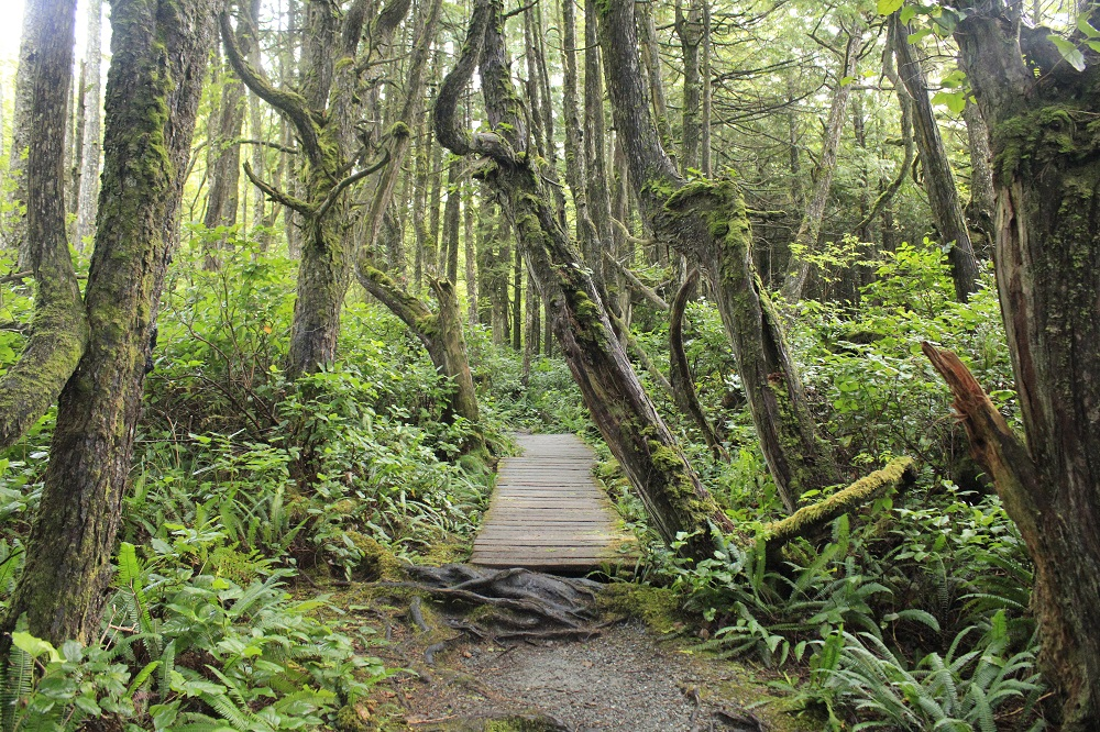 Botany Bay Trail, Pacific Northwest