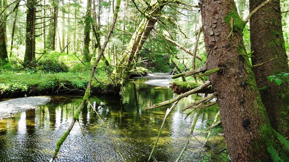 Estuaries, Pacific Northwest