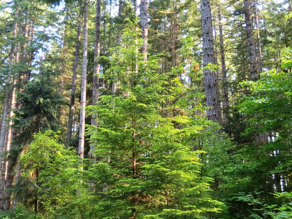 Forest Systems, Vancouver Island, Pacific Northwest