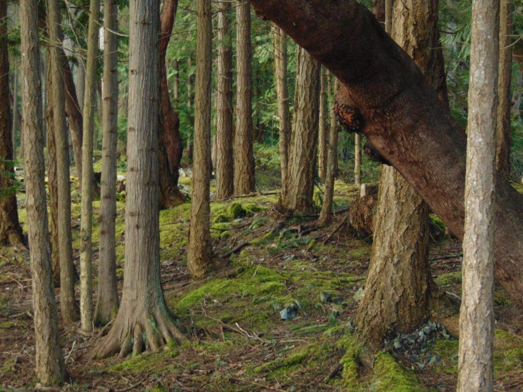 Moorecroft Park, Parks, Pacific Northwest
