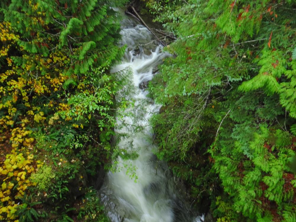 Big Tree Creek, Rivers, Pacific Northwest