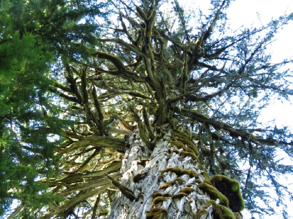 Admiral Broeren Cypress Rec Site, Parks, Pacific Northwest
