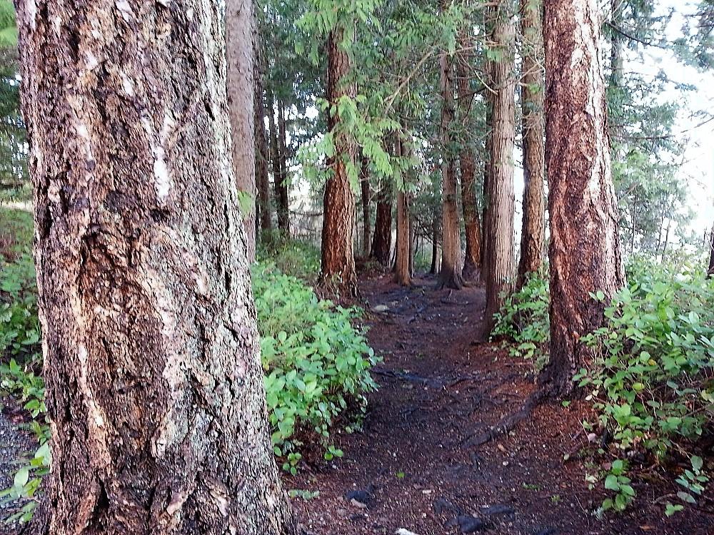 Joe Walker Park, Parks, Vancouver Island, Pacific Northwest