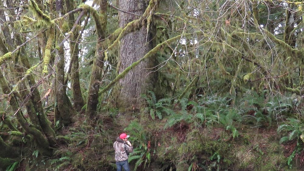 Nitinat Park, Parks, Vancouver Island, Pacific Northwest