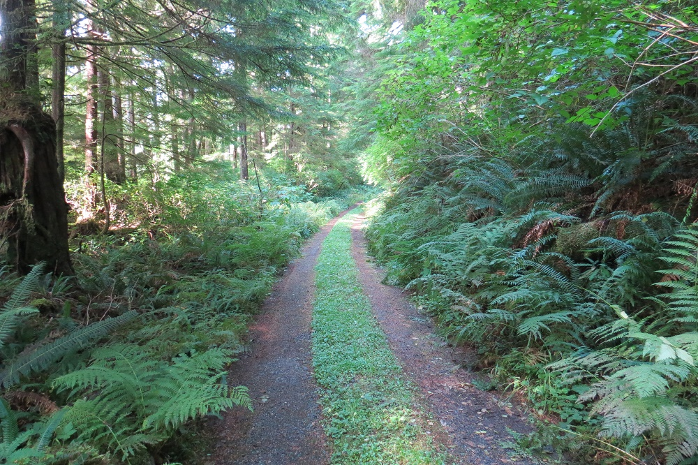 Trail Into Ronnings Gardens, Photo By Bud Logan