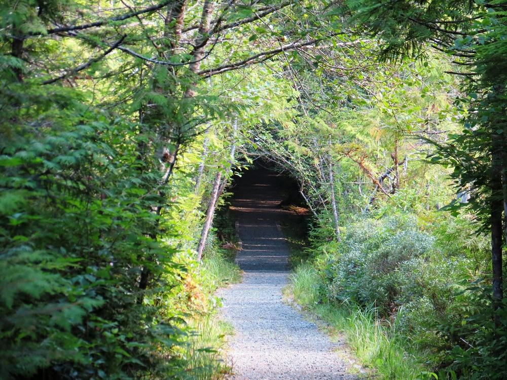 Trail To San Josef Bay, Photo By Bud Logan