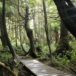 Trail to Botany Bay, Vancouver Island, BC