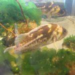 Rock Fish, Vancouver Island, BC