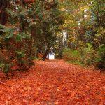 Sealand Park, Vancouver Island, BC
