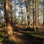 Oyster River park, Vancouver Island, BC