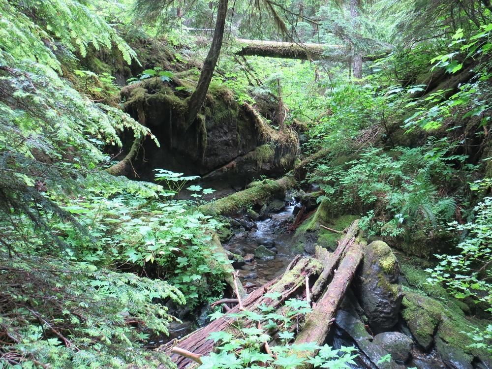 Emilia Cave, Vancouver Island, BC