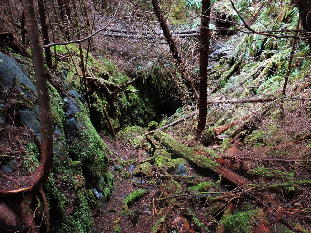 Raging River Cave, Vancouver Island, BC