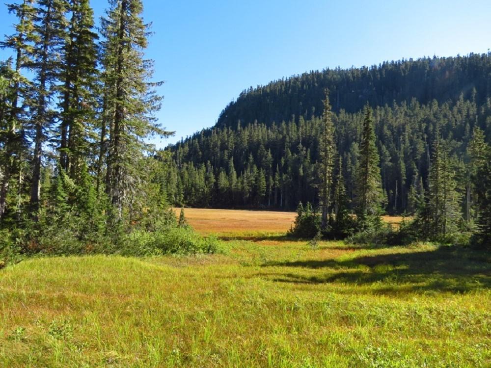 Paradise Meadows, Vancouver Island, BC