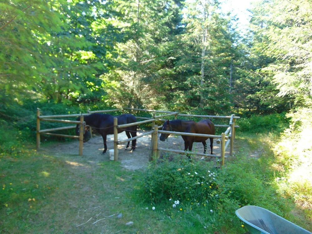 Memekay Horse Camp, Vancouver Island, BC