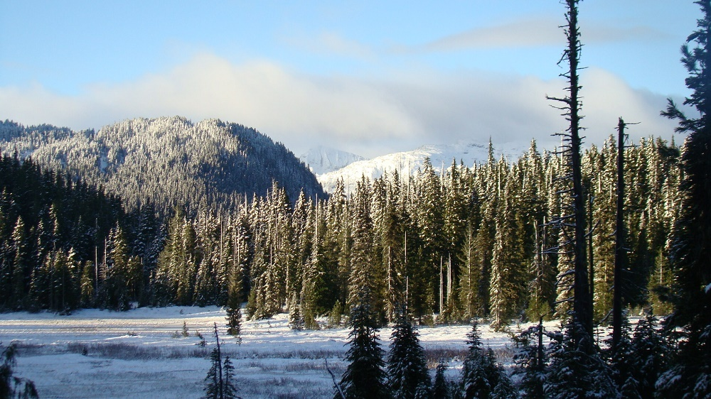 Winter On Paradise Meadows, Strathcona Park, Vancouver Island, BC