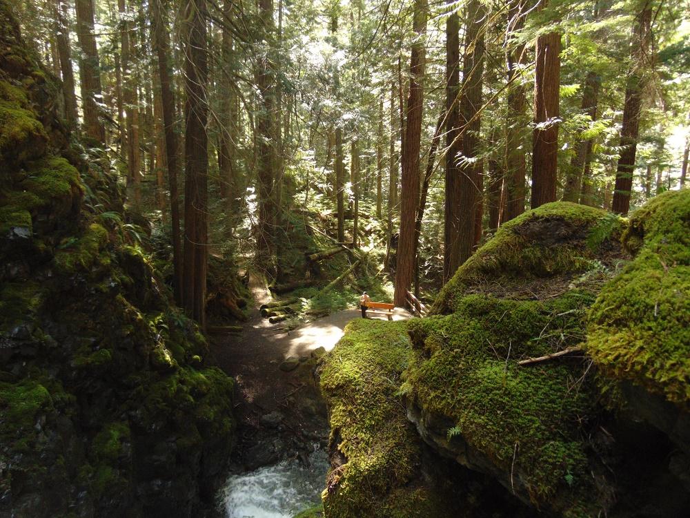 Lupin Falls, Vancouver Island, BC