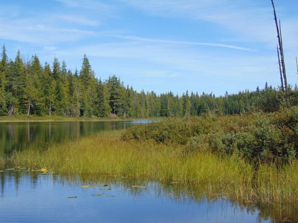 Oink Oink Falls, Regan Lake, Vancouver Island, BC