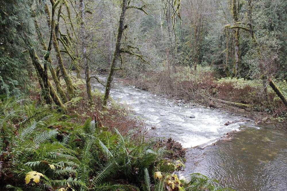 Rogers Creek, Port Alberni, Vancouver Island, BC