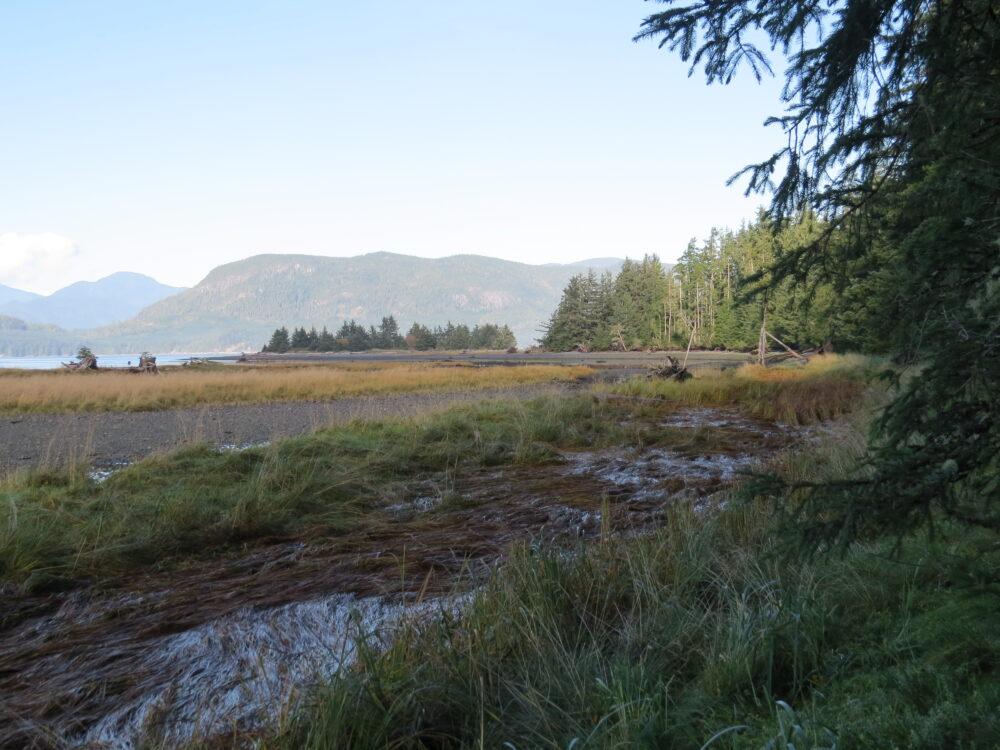 Adams River Estuary, Vancouver Island, BC